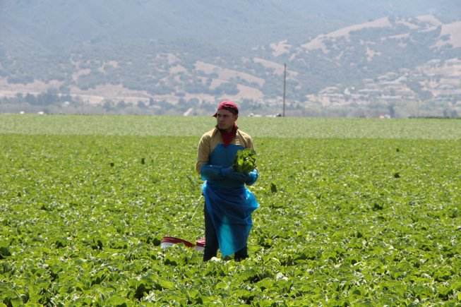 Western Growers on Anticipated Executive Action by President Obama on Immigratio