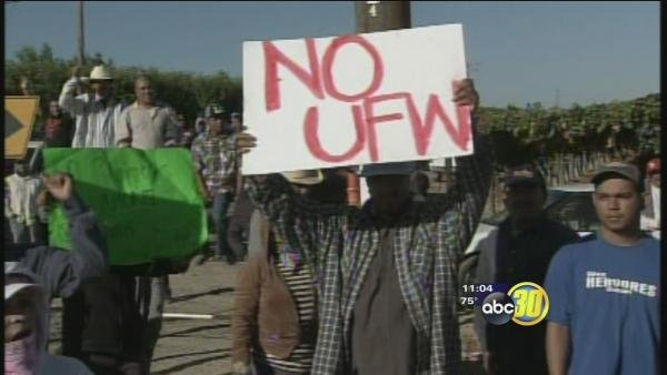 """Picture of Farm Worker Holding """"No UFW"""" sign"""