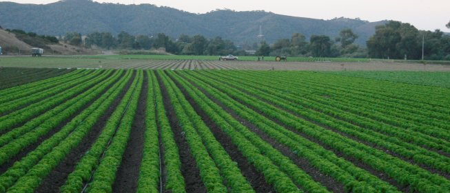 Submit Comments on Draft National Sustainability Ag Standards