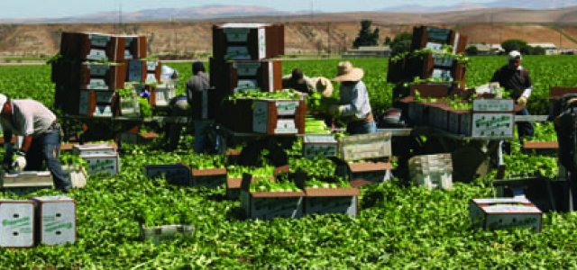 Labor litigation has once again moved to the forefront in agriculture.