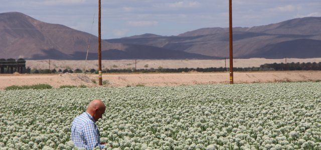 Nassif Immigration Op-ed Published in Arizona