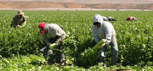California Labor Commissioner highlights ag in Activities Report.