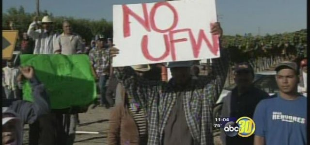 "Picture of Farm Worker Holding ""No UFW"" sign"
