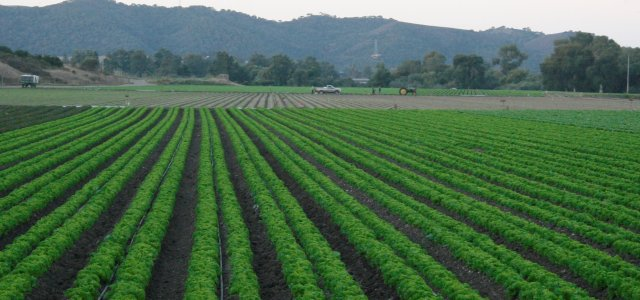 Ag Water & Food Safety Findings in One Report