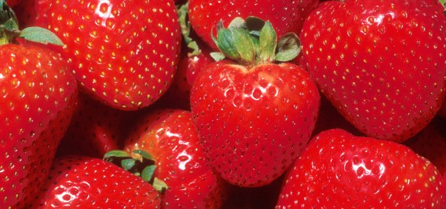 Strawberry Crop Insurance Deadline-Sept 30