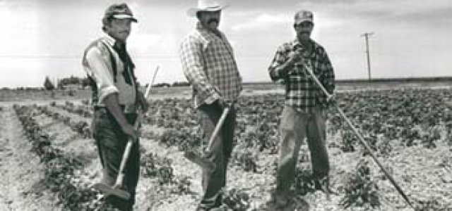 The Drought and California's Farm Workers